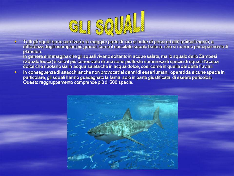  Tutti gli squali sono carnivori e la maggior parte di loro si nutre di pesci ed altri animali marini, a differenza degli esemplari più grandi, come