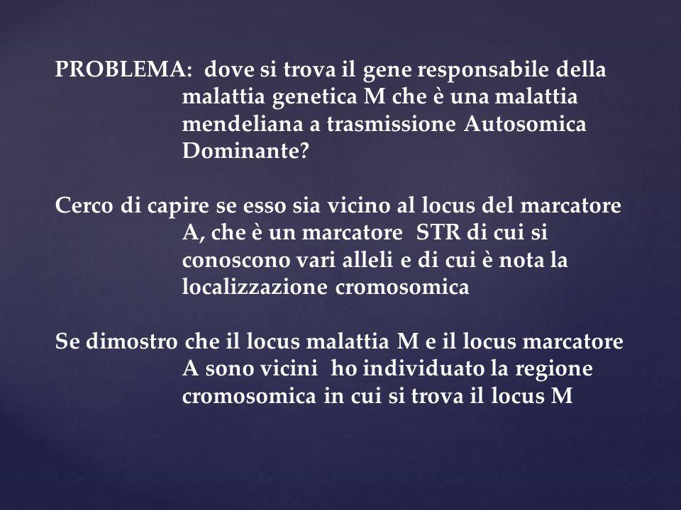 PROBLEMA: dove si trova il gene responsabile della malattia genetica M che è una malattia mendeliana a trasmissione Autosomica Dominante? Cerco di cap