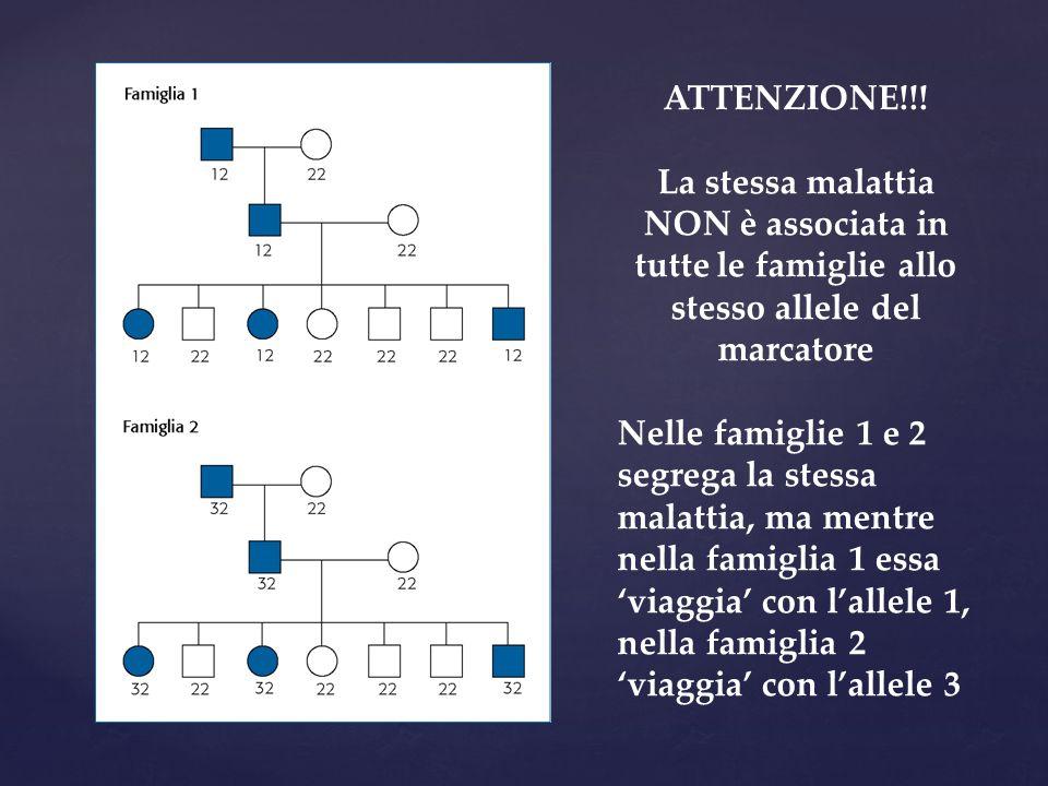 ATTENZIONE!!! La stessa malattia NON è associata in tutte le famiglie allo stesso allele del marcatore Nelle famiglie 1 e 2 segrega la stessa malattia