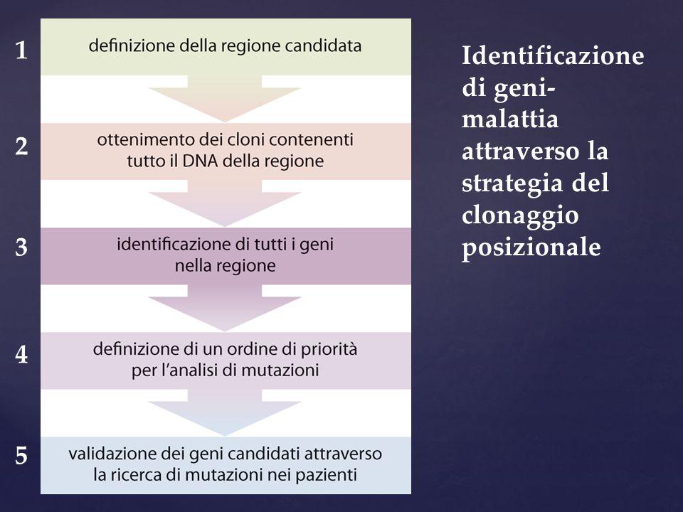 Identificazione di geni- malattia attraverso la strategia del clonaggio posizionale 1234512345