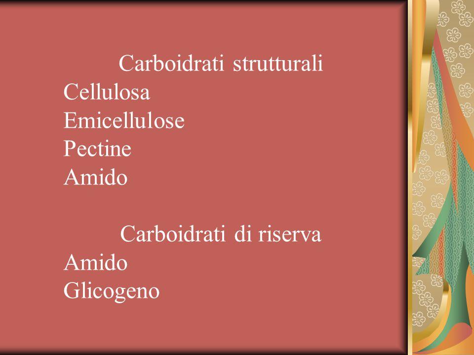 Classificazione Simple sugars (hexoses, pentoses) oligosaccharides (sucrose, maltose, lactose, flatulence-causing sugars: raffinose, stachyose, verbascose) Polysaccharides=complex carbohydrates (heteropolysaccharides: pectins, vegetables gums, homopolysaccharides: cellulose, starches, glycogen)