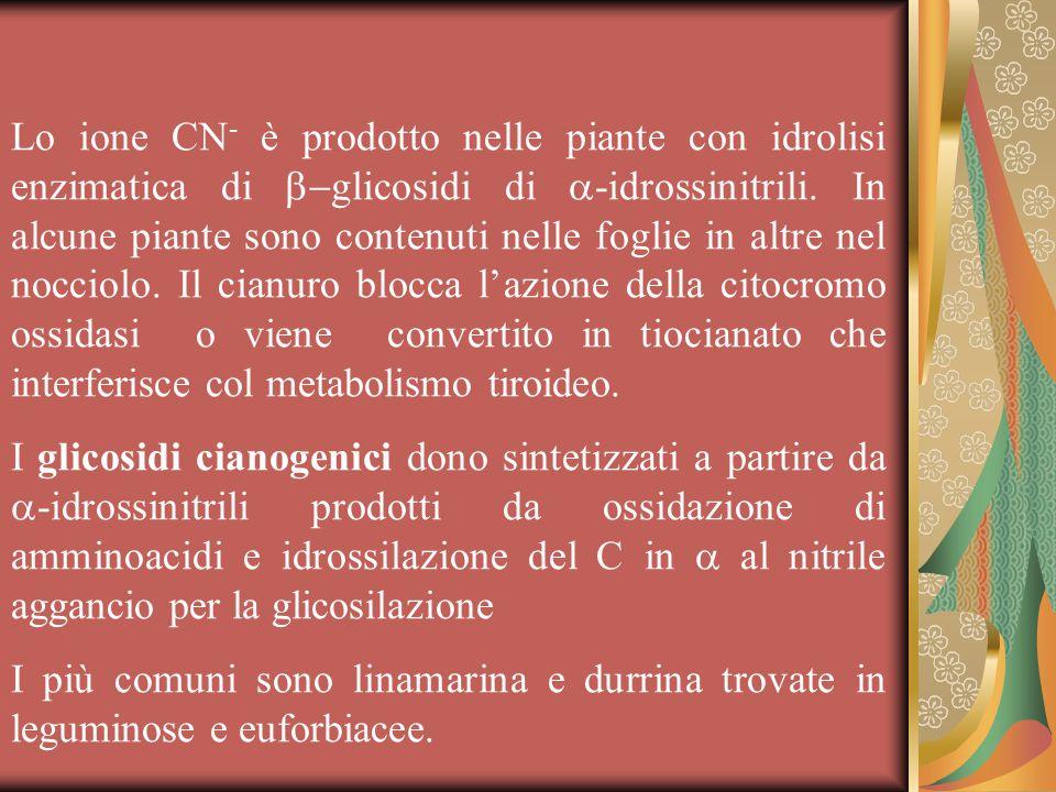 Lo ione CN - è prodotto nelle piante con idrolisi enzimatica di  glicosidi di  -idrossinitrili.