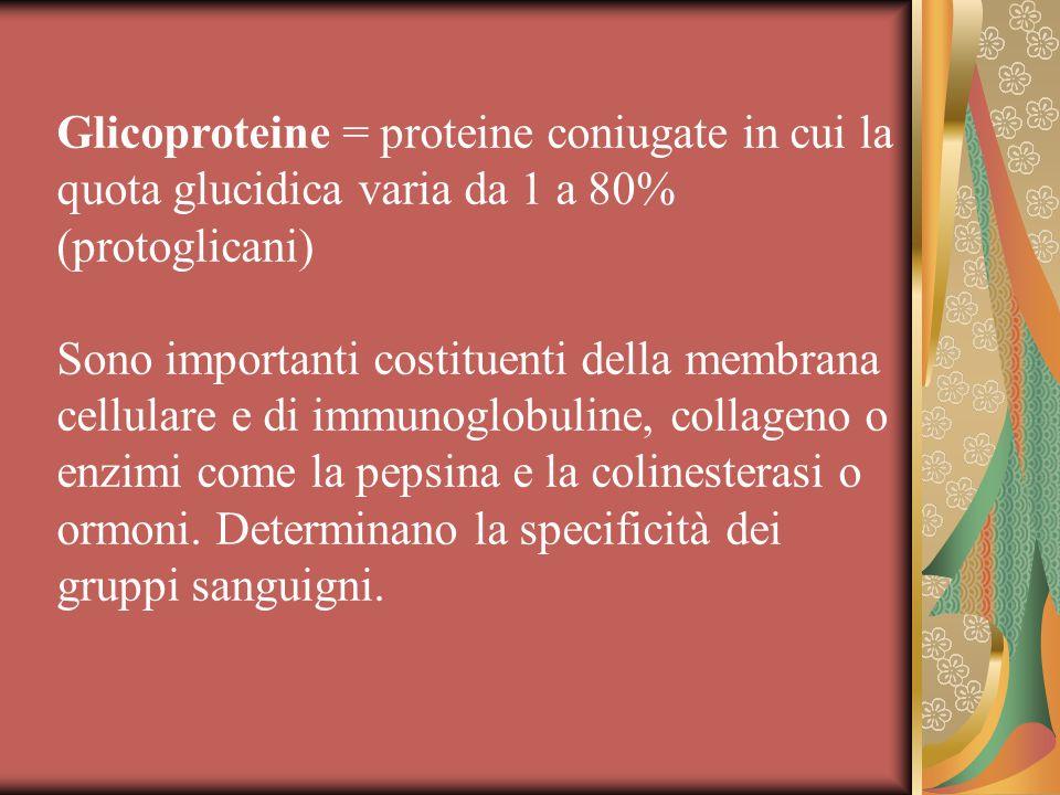 Glicoproteine = proteine coniugate in cui la quota glucidica varia da 1 a 80% (protoglicani) Sono importanti costituenti della membrana cellulare e di immunoglobuline, collageno o enzimi come la pepsina e la colinesterasi o ormoni.