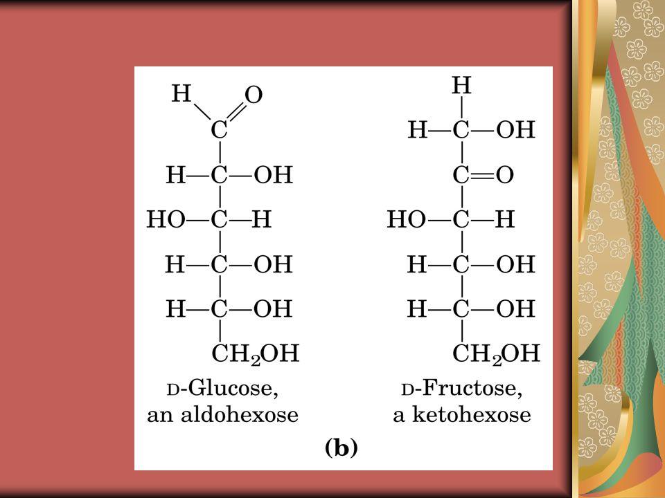 Glicogeno  polisaccaride di riserva del tessuto animale