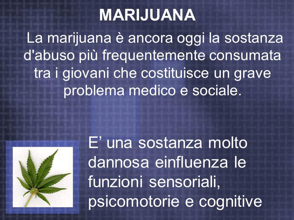 MARIJUANA La marijuana è ancora oggi la sostanza d'abuso più frequentemente consumata tra i giovani che costituisce un grave problema medico e sociale