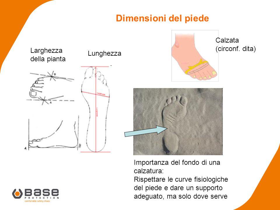 Larghezza della pianta Calzata (circonf. dita) Dimensioni del piede Importanza del fondo di una calzatura: Rispettare le curve fisiologiche del piede