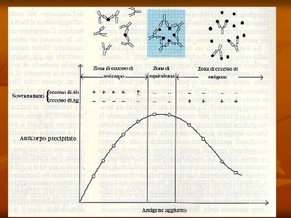 METODI ANALITICI BASATI SU ANTICORPI Diffusione monodimensionale semplice: la soluzione contenente (potenzialmente) l'antigene in esame viene stratificata sopra un gel di agar contenente un opportuno antisiero.