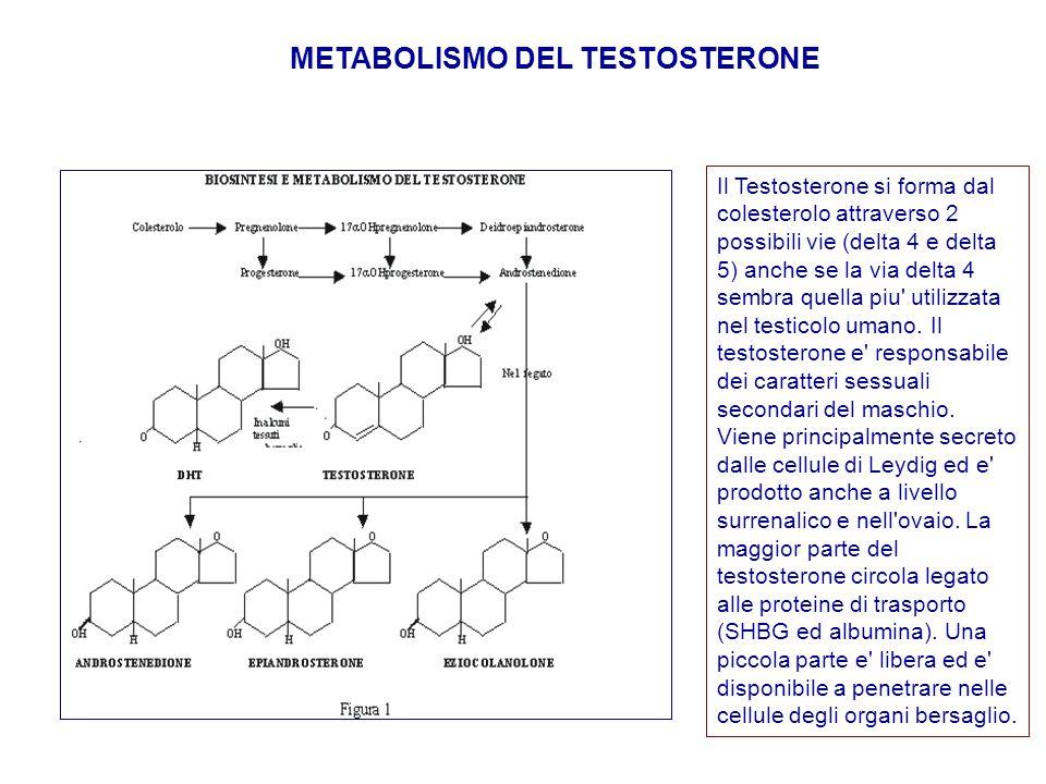Il Testosterone si forma dal colesterolo attraverso 2 possibili vie (delta 4 e delta 5) anche se la via delta 4 sembra quella piu' utilizzata nel test