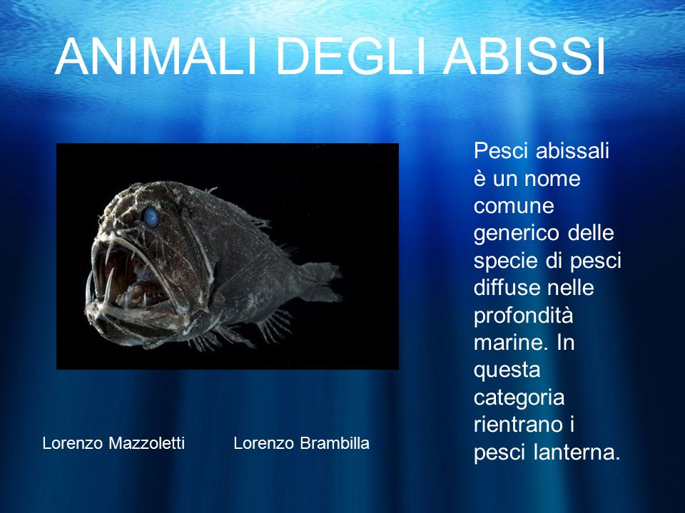 ANIMALI DEGLI ABISSI Pesci abissali è un nome comune generico delle specie di pesci diffuse nelle profondità marine.