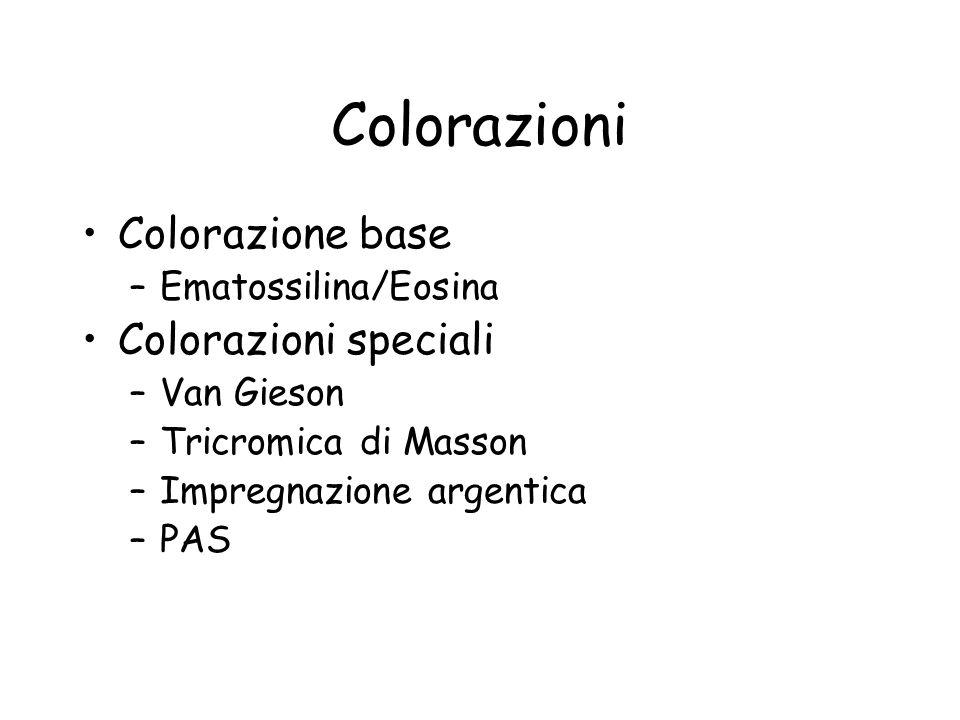 Colorazioni Colorazione base –Ematossilina/Eosina Colorazioni speciali –Van Gieson –Tricromica di Masson –Impregnazione argentica –PAS