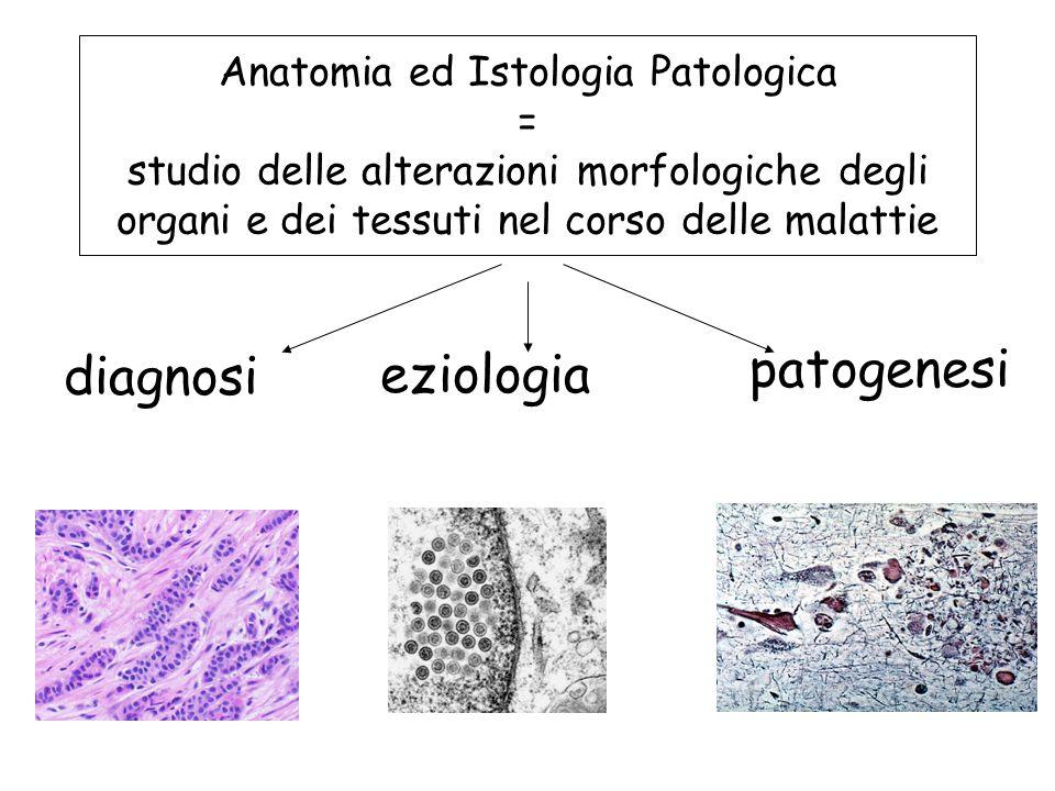Anatomia ed Istologia Patologica = studio delle alterazioni morfologiche degli organi e dei tessuti nel corso delle malattie diagnosi eziologia patoge