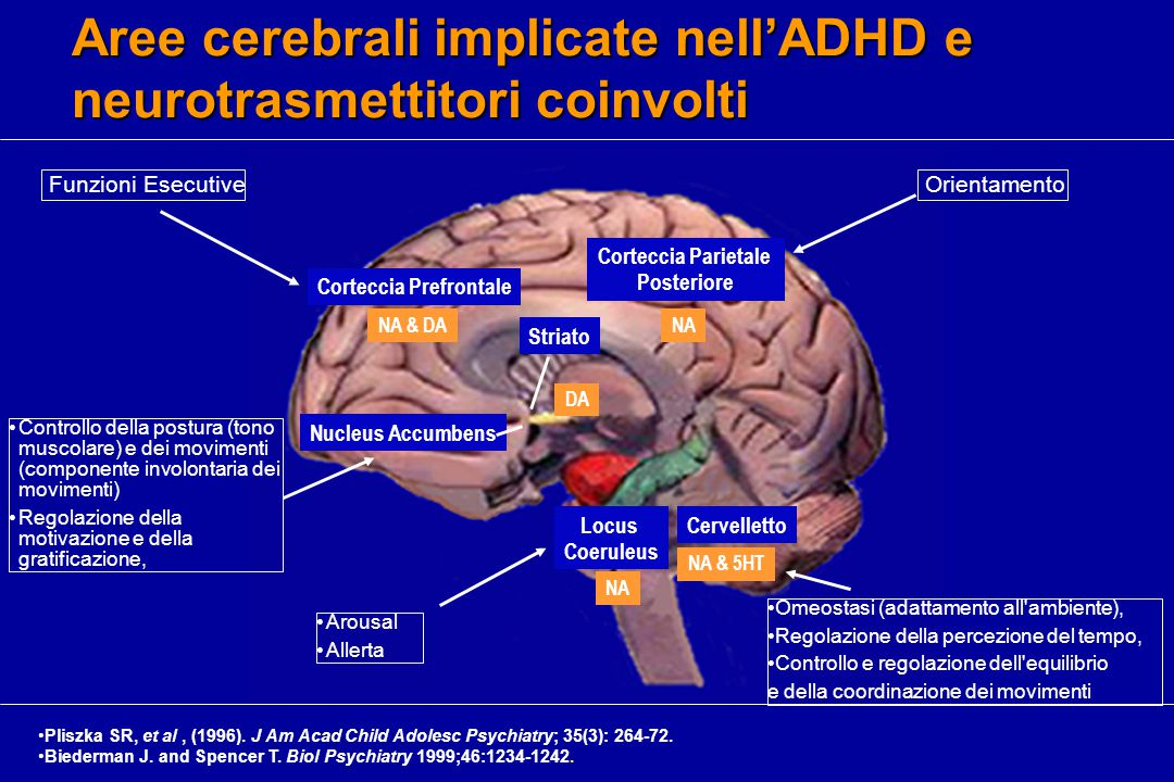 Aree cerebrali implicate nell'ADHD e neurotrasmettitori coinvolti Corteccia Prefrontale NA & DA Nucleus Accumbens Striato Corteccia Parietale Posteriore NA NA & 5HT Pliszka SR, et al, (1996).