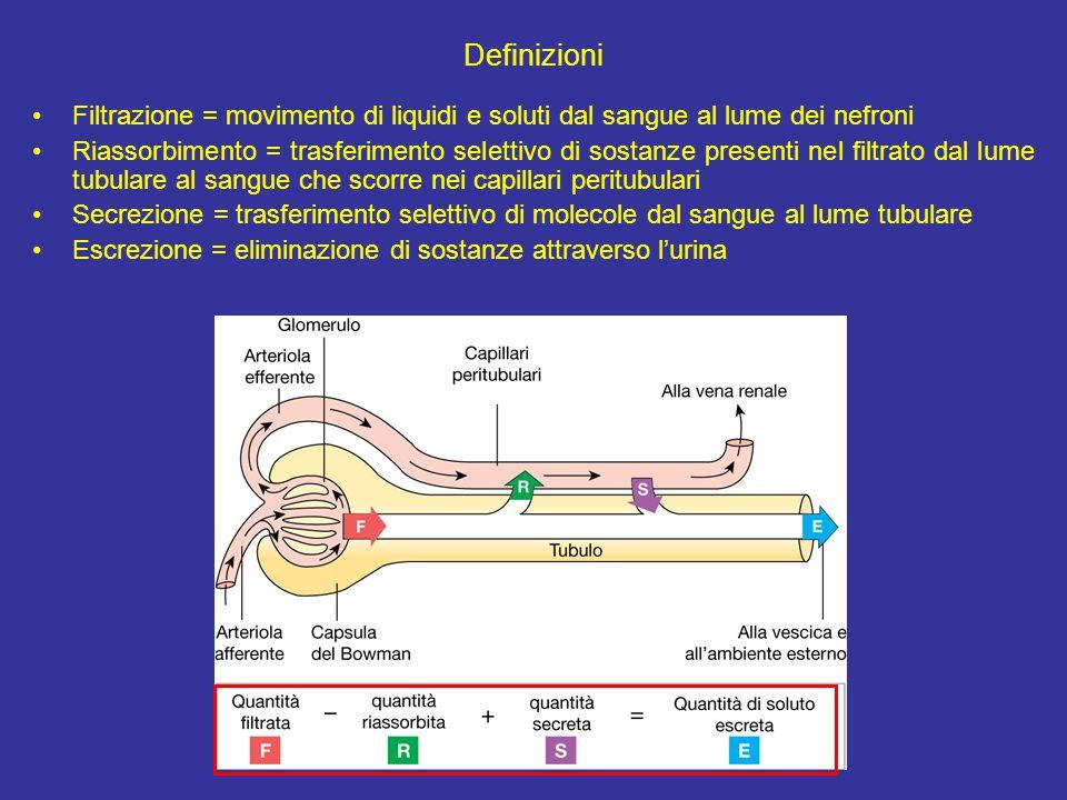 Definizioni Filtrazione = movimento di liquidi e soluti dal sangue al lume dei nefroni Riassorbimento = trasferimento selettivo di sostanze presenti nel filtrato dal lume tubulare al sangue che scorre nei capillari peritubulari Secrezione = trasferimento selettivo di molecole dal sangue al lume tubulare Escrezione = eliminazione di sostanze attraverso l'urina
