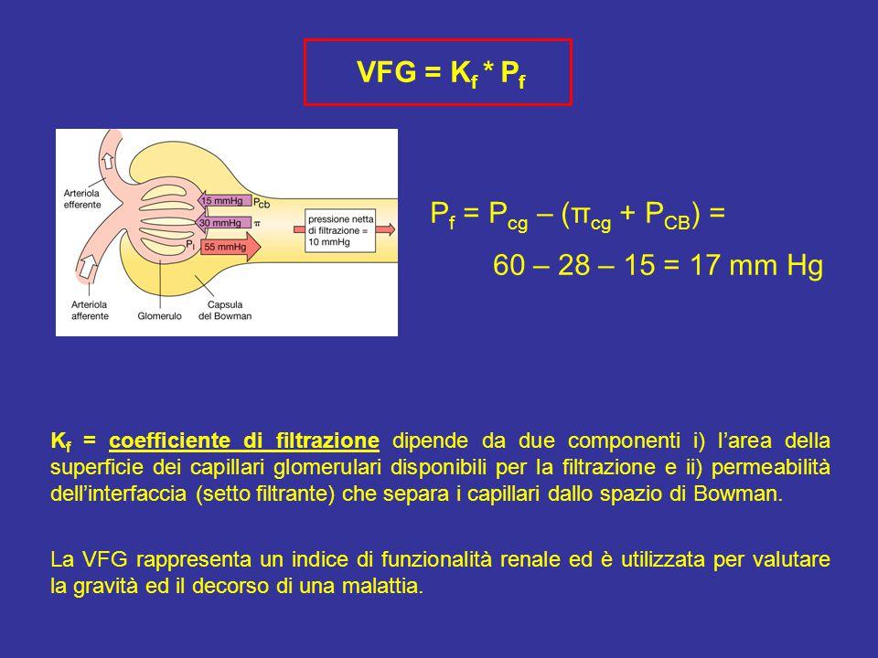 VFG = K f * P f P f = P cg – (π cg + P CB ) = 60 – 28 – 15 = 17 mm Hg K f = coefficiente di filtrazione dipende da due componenti i) l'area della superficie dei capillari glomerulari disponibili per la filtrazione e ii) permeabilità dell'interfaccia (setto filtrante) che separa i capillari dallo spazio di Bowman.
