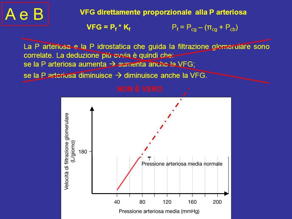 La P arteriosa e la P idrostatica che guida la filtrazione glomerulare sono correlate.