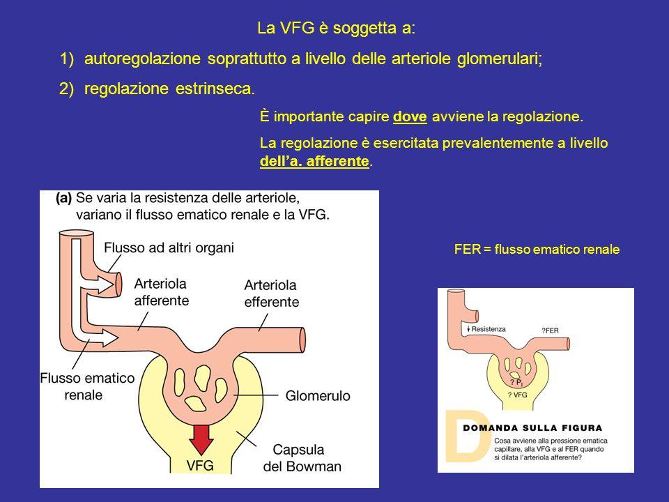 La VFG è soggetta a: 1)autoregolazione soprattutto a livello delle arteriole glomerulari; 2)regolazione estrinseca.