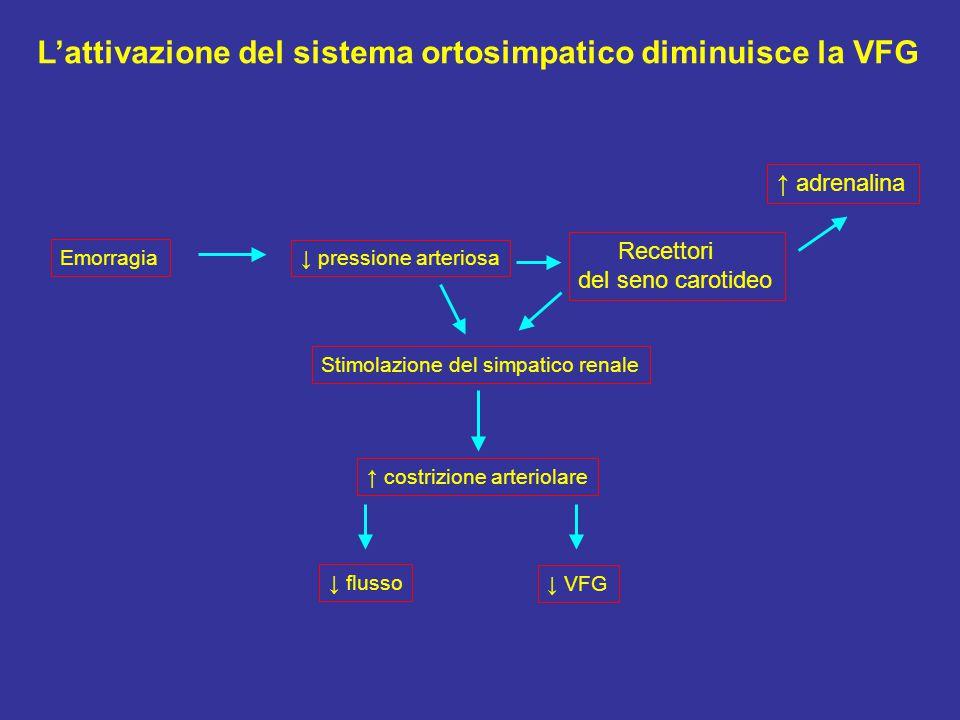 ↓ pressione arteriosa Recettori del seno carotideo ↑ adrenalina Stimolazione del simpatico renale ↑ costrizione arteriolare ↓ flusso ↓ VFG L'attivazione del sistema ortosimpatico diminuisce la VFG