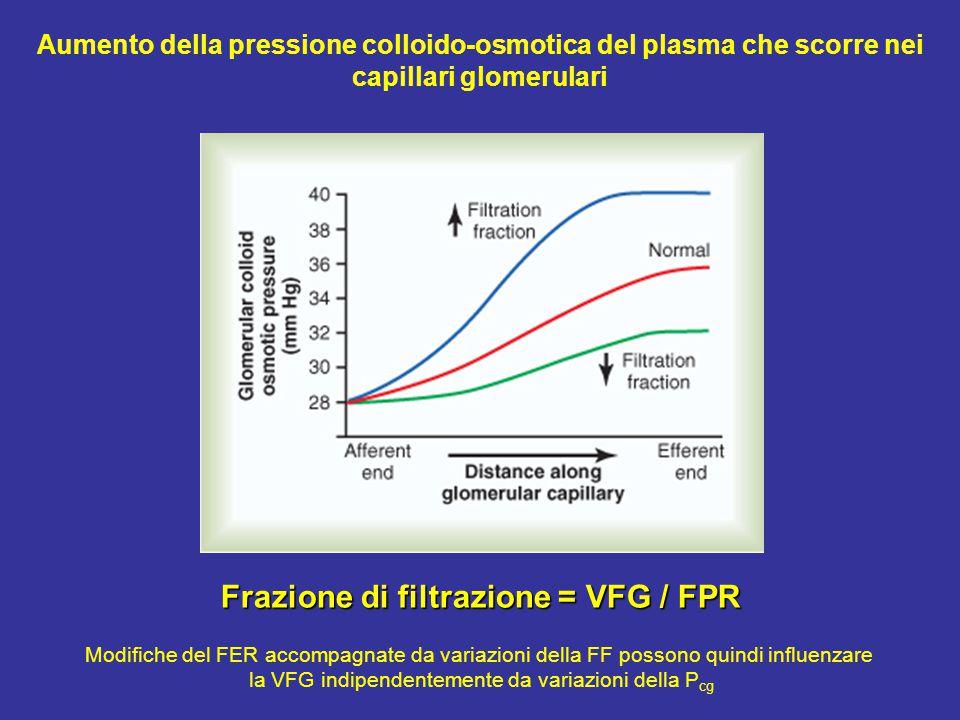 Frazione di filtrazione = VFG / FPR Aumento della pressione colloido-osmotica del plasma che scorre nei capillari glomerulari Modifiche del FER accompagnate da variazioni della FF possono quindi influenzare la VFG indipendentemente da variazioni della P cg