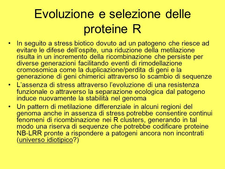 Evoluzione e selezione delle proteine R In seguito a stress biotico dovuto ad un patogeno che riesce ad evitare le difese dell'ospite, una riduzione della metilazione risulta in un incremento della ricombinazione che persiste per diverse generazioni facilitando eventi di rimodellazione cromosomica come la duplicazione/perdita di geni e la generazione di geni chimerici attraverso lo scambio di sequenze L'assenza di stress attraverso l'evoluzione di una resistenza funzionale o attraverso la separazione ecologica dal patogeno induce nuovamente la stabilità nel genoma Un pattern di metilazione differenziale in alcuni regioni del genoma anche in assenza di stress potrebbe consentire continui fenomeni di ricombinazione nei R clusters, generando in tal modo una riserva di sequenze che potrebbe codificare proteine NB-LRR pronte a rispondere a patogeni ancora non incontrati (universo idiotipico?)