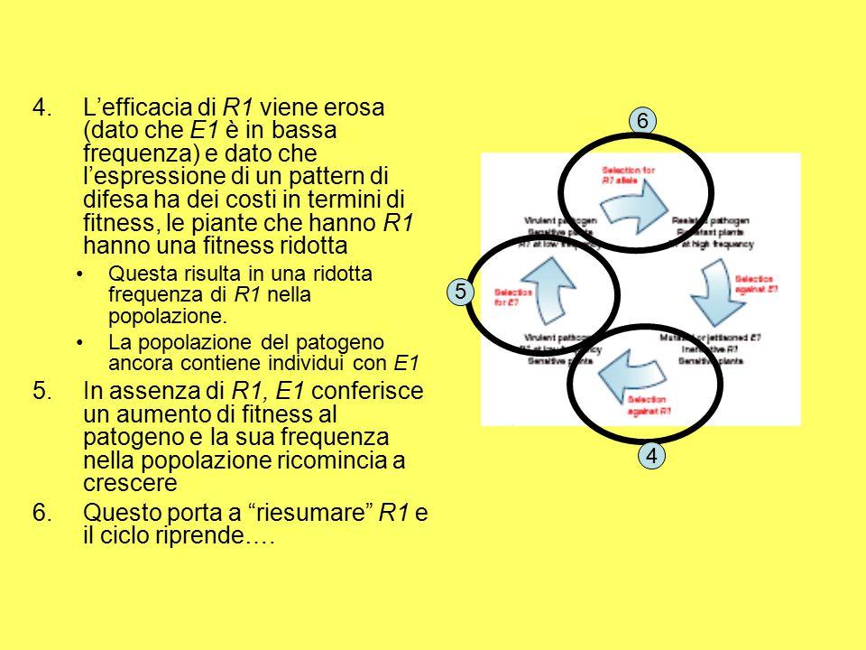 4.L'efficacia di R1 viene erosa (dato che E1 è in bassa frequenza) e dato che l'espressione di un pattern di difesa ha dei costi in termini di fitness, le piante che hanno R1 hanno una fitness ridotta Questa risulta in una ridotta frequenza di R1 nella popolazione.