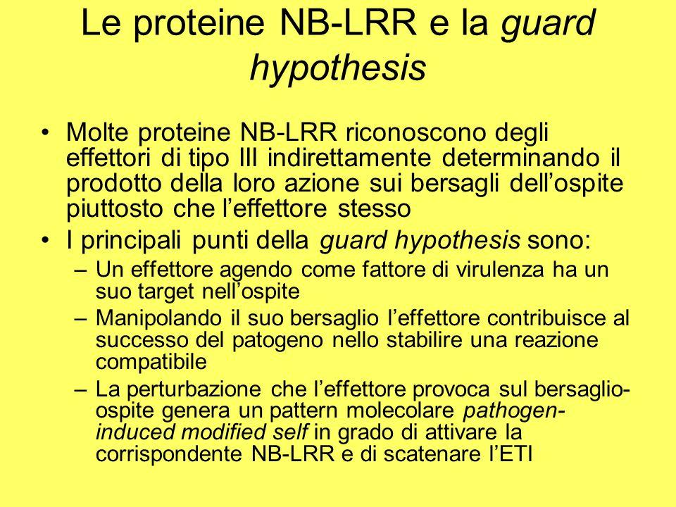 Le proteine NB-LRR e la guard hypothesis Molte proteine NB-LRR riconoscono degli effettori di tipo III indirettamente determinando il prodotto della loro azione sui bersagli dell'ospite piuttosto che l'effettore stesso I principali punti della guard hypothesis sono: –Un effettore agendo come fattore di virulenza ha un suo target nell'ospite –Manipolando il suo bersaglio l'effettore contribuisce al successo del patogeno nello stabilire una reazione compatibile –La perturbazione che l'effettore provoca sul bersaglio- ospite genera un pattern molecolare pathogen- induced modified self in grado di attivare la corrispondente NB-LRR e di scatenare l'ETI