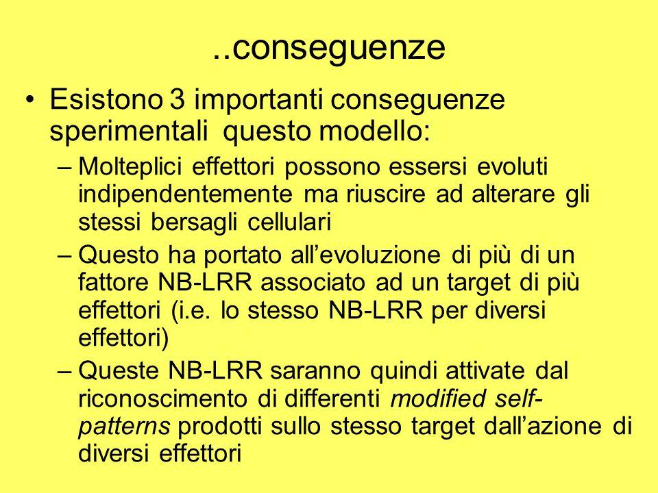 ..conseguenze Esistono 3 importanti conseguenze sperimentali questo modello: –Molteplici effettori possono essersi evoluti indipendentemente ma riuscire ad alterare gli stessi bersagli cellulari –Questo ha portato all'evoluzione di più di un fattore NB-LRR associato ad un target di più effettori (i.e.