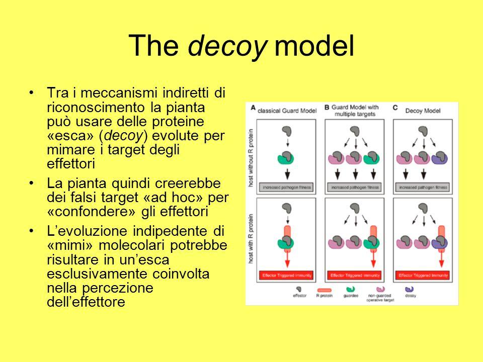 The decoy model Tra i meccanismi indiretti di riconoscimento la pianta può usare delle proteine «esca» (decoy) evolute per mimare i target degli effettori La pianta quindi creerebbe dei falsi target «ad hoc» per «confondere» gli effettori L'evoluzione indipedente di «mimi» molecolari potrebbe risultare in un'esca esclusivamente coinvolta nella percezione dell'effettore