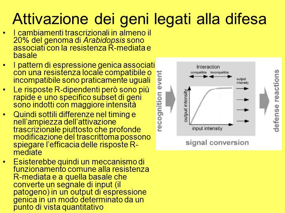 Attivazione dei geni legati alla difesa I cambiamenti trascrizionali in almeno il 20% del genoma di Arabidopsis sono associati con la resistenza R-med