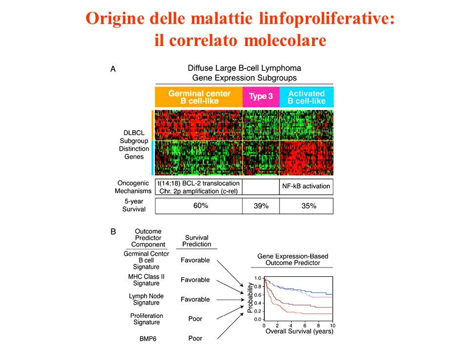 Origine delle malattie linfoproliferative: il correlato molecolare