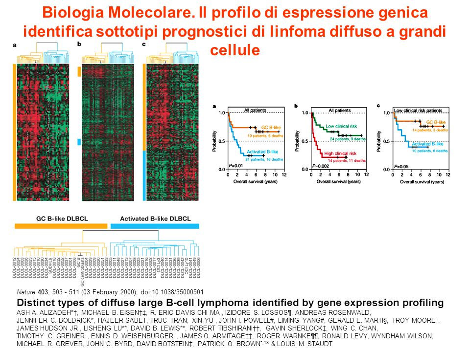 Nature 403, 503 - 511 (03 February 2000); doi:10.1038/35000501 Distinct types of diffuse large B-cell lymphoma identified by gene expression profiling ASH A.