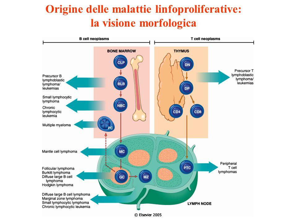 Origine delle malattie linfoproliferative: la visione morfologica