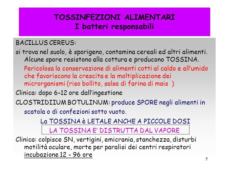 5 TOSSINFEZIONI ALIMENTARI I batteri responsabili BACILLUS CEREUS: si trova nel suolo, è sporigeno, contamina cereali ed altri alimenti. Alcune spore