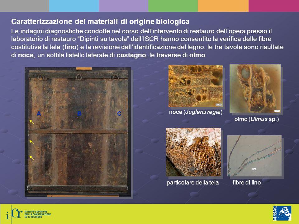 """Le indagini diagnostiche condotte nel corso dell'intervento di restauro dell'opera presso il laboratorio di restauro """"Dipinti su tavola"""" dell'ISCR han"""