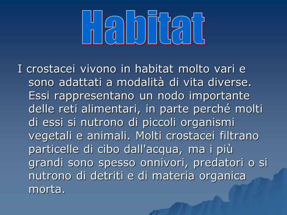 I crostacei vivono in habitat molto vari e sono adattati a modalità di vita diverse.