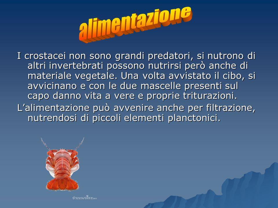 I crostacei non sono grandi predatori, si nutrono di altri invertebrati possono nutrirsi però anche di materiale vegetale.