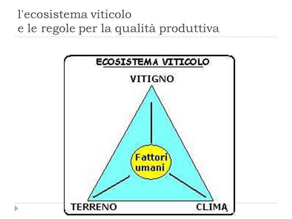 l'ecosistema viticolo e le regole per la qualità produttiva