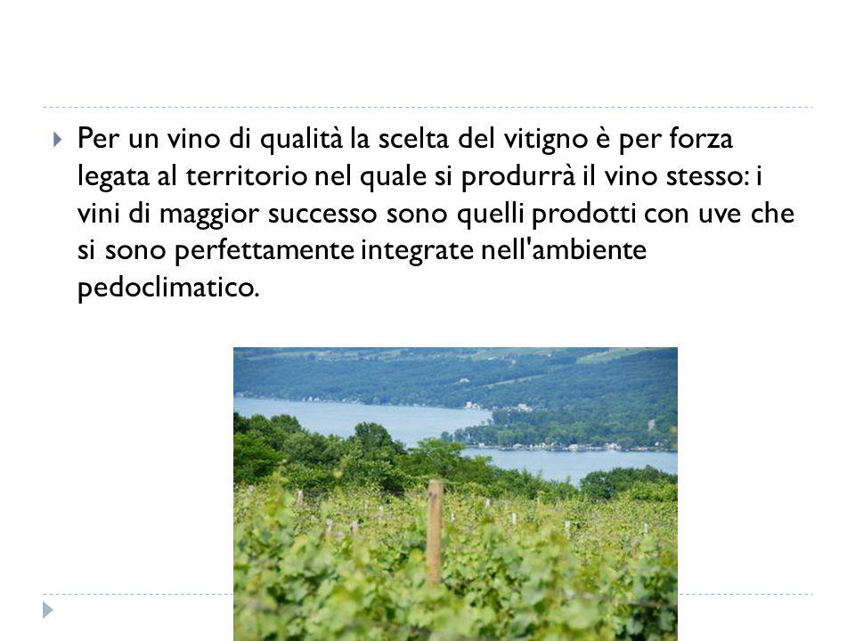  Per un vino di qualità la scelta del vitigno è per forza legata al territorio nel quale si produrrà il vino stesso: i vini di maggior successo sono