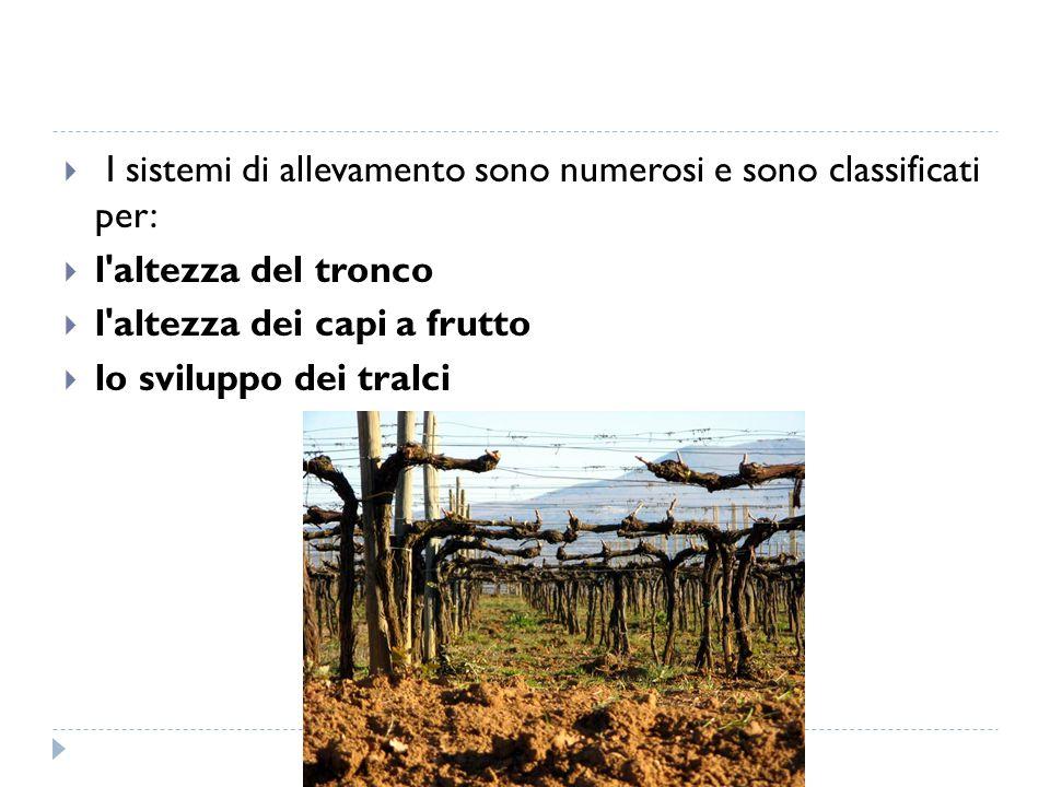  I sistemi di allevamento sono numerosi e sono classificati per:  l'altezza del tronco  l'altezza dei capi a frutto  lo sviluppo dei tralci