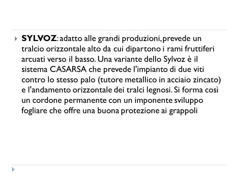  SYLVOZ: adatto alle grandi produzioni, prevede un tralcio orizzontale alto da cui dipartono i rami fruttiferi arcuati verso il basso. Una variante d