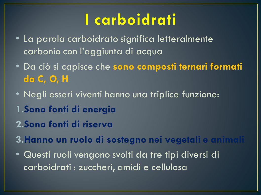 L a parola carboidrato significa letteralmente carbonio con l'aggiunta di acqua D a ciò si capisce che sono composti ternari formati da C, O, H N egli