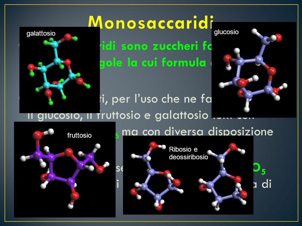 I monosaccaridi sono zuccheri formati da molecole singole la cui formula chimica è C n H 2n O n I più conosciuti, per l'uso che ne facciamo, sono il g