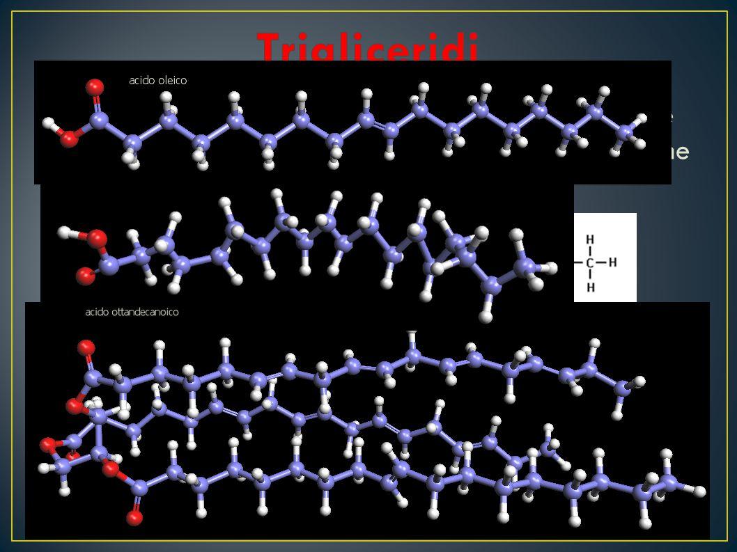 I trigliceridi sono grassi che si ottengono dall'unione del glicerolo (alcol) con tre acidi grassi e liberazione di altrettante molecole di acqua