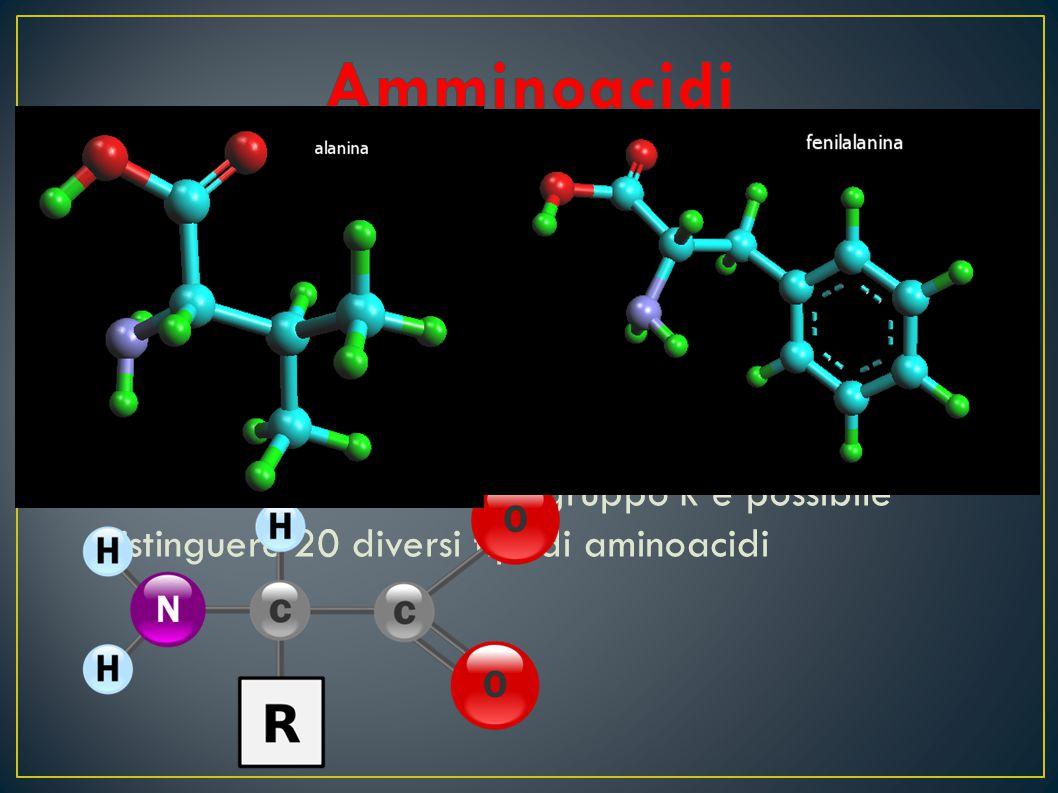 Gli aminoacidi sono i costituenti delle proteine Sono caratterizzati dalla presenza di in gruppo acido –COOH e da un gruppo amminico –NH 2 legati allo