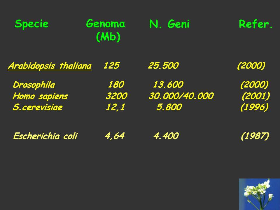 Specie Genoma (Mb) N. GeniRefer. Escherichia coli 4,64 4.400 (1987) Arabidopsis thaliana 125 25.500 (2000) Drosophila 180 13.600 (2000) Homo sapiens 3