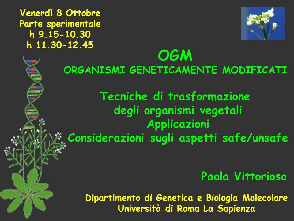 OGM ORGANISMI GENETICAMENTE MODIFICATI Tecniche di trasformazione degli organismi vegetali Applicazioni Considerazioni sugli aspetti safe/unsafe Paola