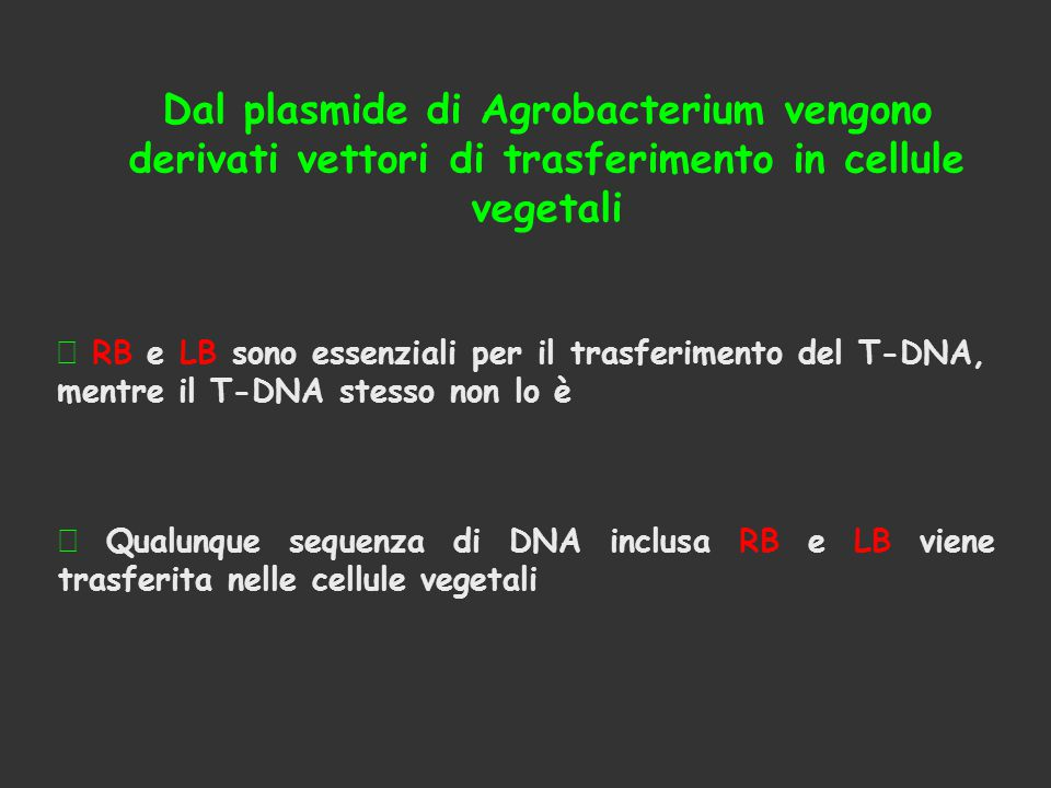  RB e LB sono essenziali per il trasferimento del T-DNA, mentre il T-DNA stesso non lo è Dal plasmide di Agrobacterium vengono derivati vettori di trasferimento in cellule vegetali  Qualunque sequenza di DNA inclusa RB e LB viene trasferita nelle cellule vegetali