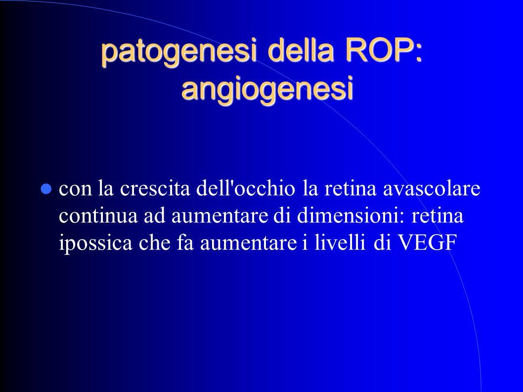 patogenesi della ROP: angiogenesi con la crescita dell occhio la retina avascolare continua ad aumentare di dimensioni: retina ipossica che fa aumentare i livelli di VEGF