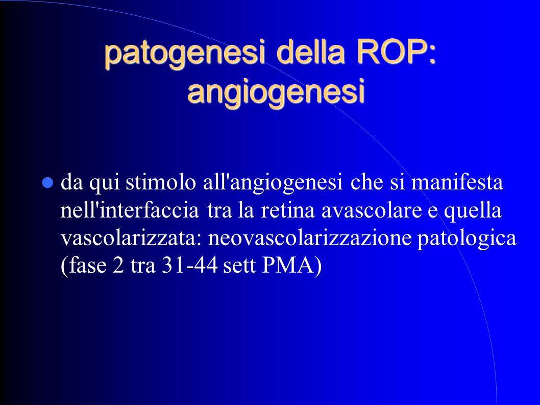 patogenesi della ROP: angiogenesi da qui stimolo all angiogenesi che si manifesta nell interfaccia tra la retina avascolare e quella vascolarizzata: neovascolarizzazione patologica (fase 2 tra 31-44 sett PMA)