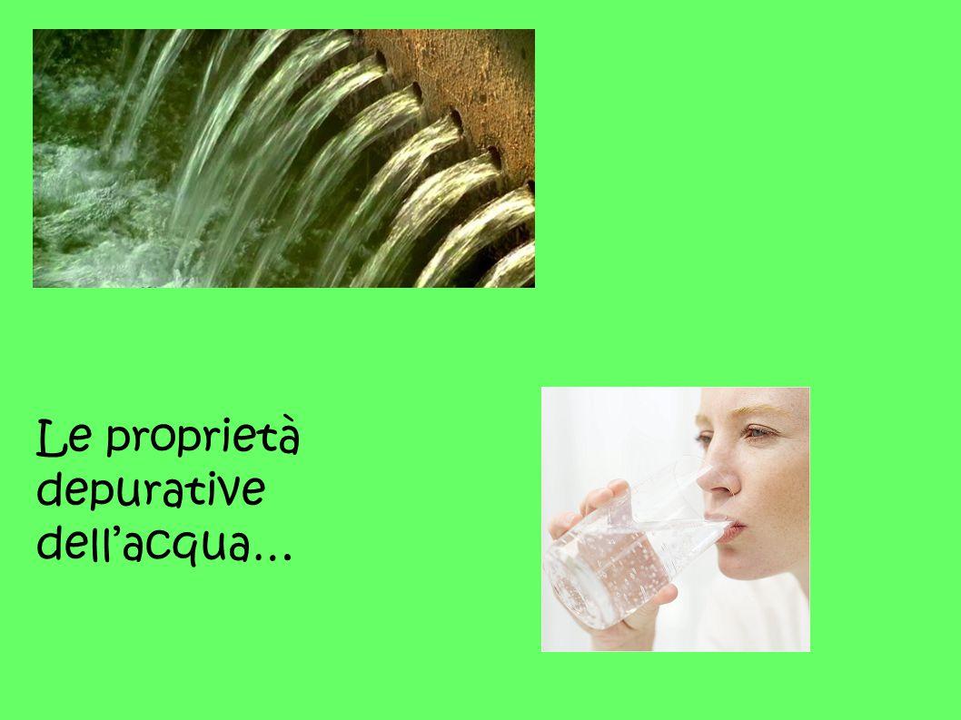 Le proprietà depurative dell'acqua…