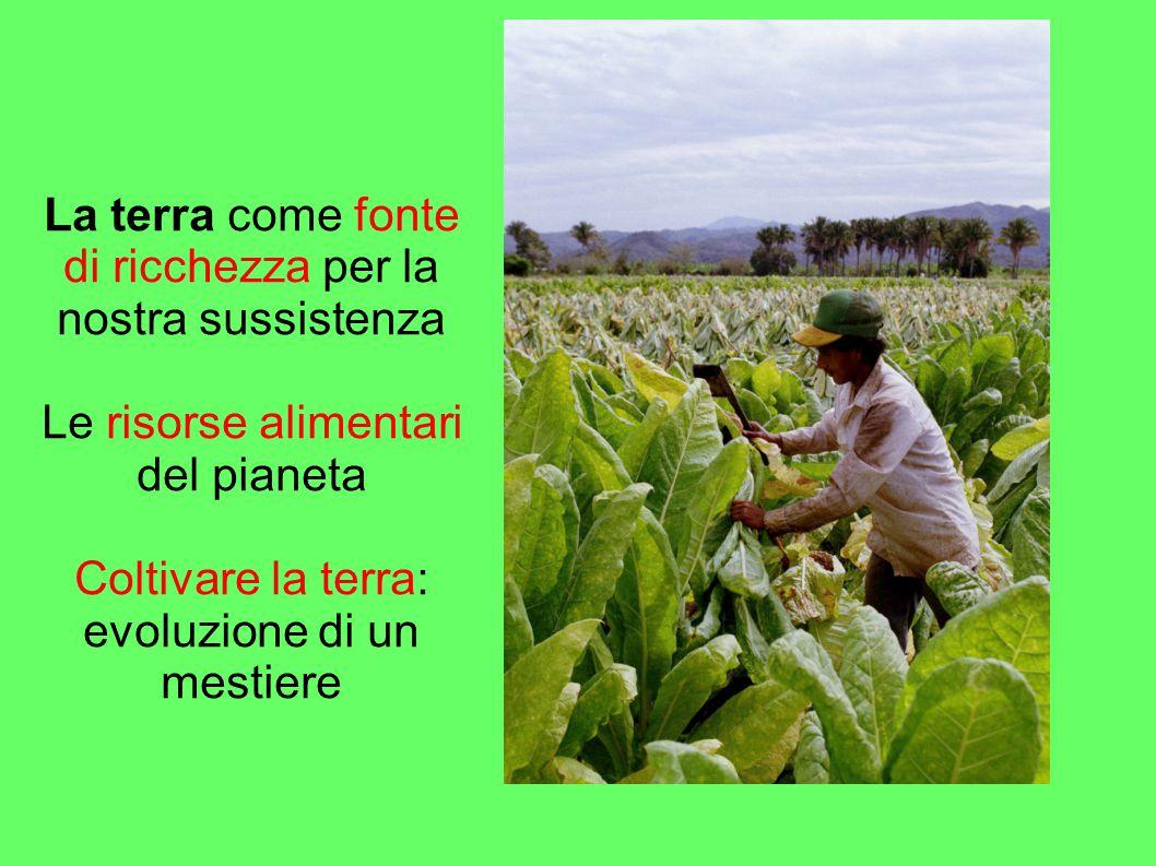 La terra come fonte di ricchezza per la nostra sussistenza Le risorse alimentari del pianeta Coltivare la terra: evoluzione di un mestiere